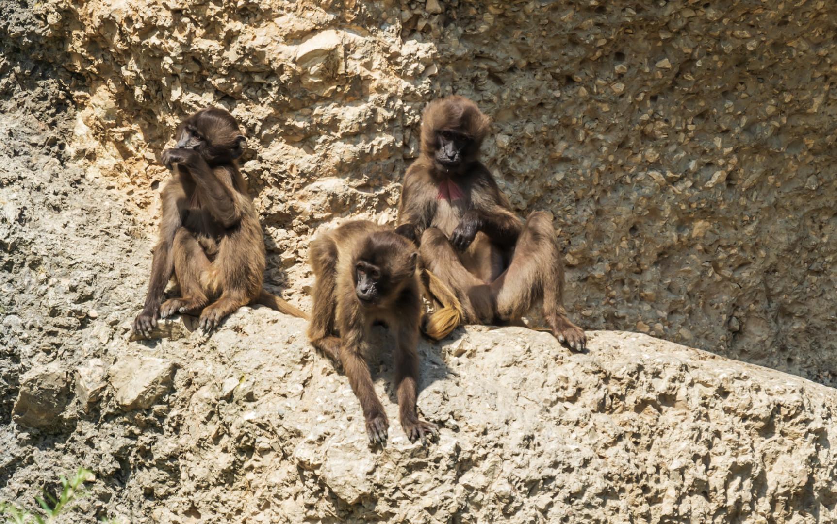 Affen gemütliches Beisammensein