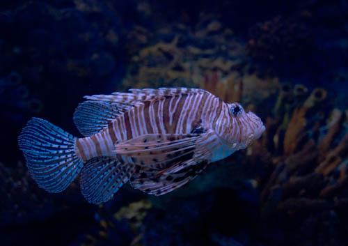 Fisch im Ozean Aquaruim in Lissabon