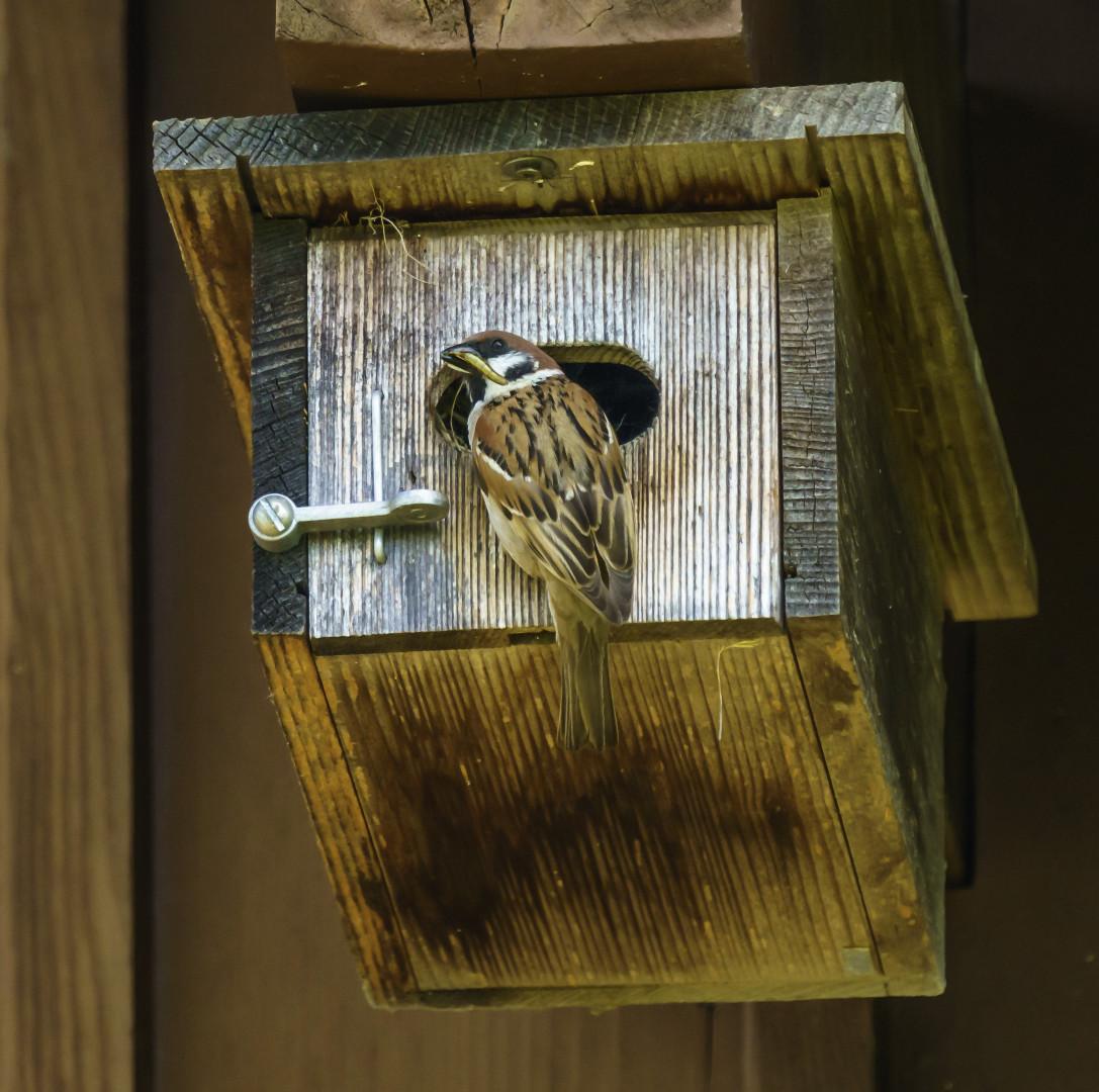 Futter für die Jungvögel