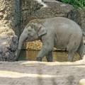 Elefant im Zürcher Zoo