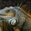 Reptil beim Tonis Zoo