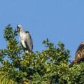Reiher und Falke nebeneinander