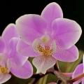 Makroaufnahme einer Orchidee